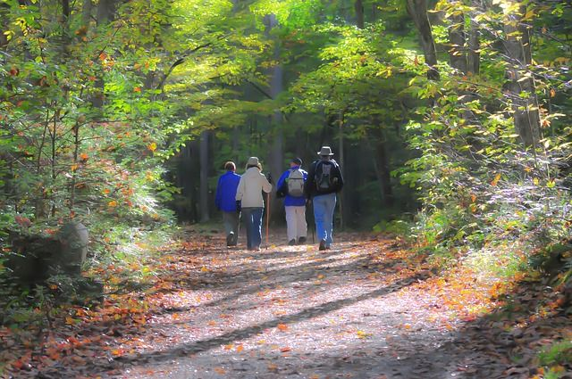 group walking in nature